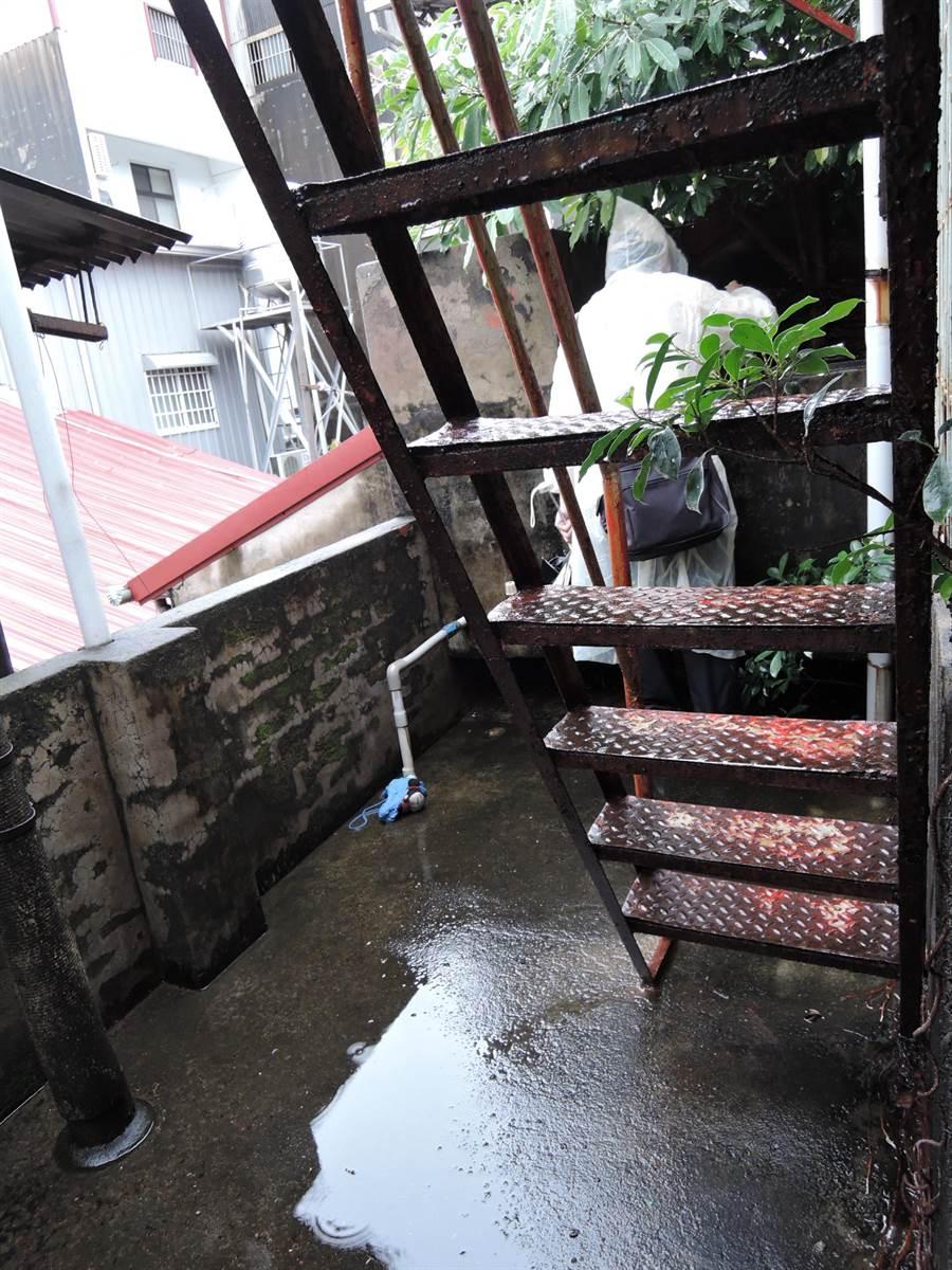屋頂天溝及屋後溝交錯積水嚴重,陽台及地下室若積水都容易成為孳生病媒蚊高風險場域。(曹婷婷攝)
