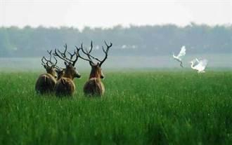 人間仙境!黃(渤)海候鳥棲息地列世界遺產
