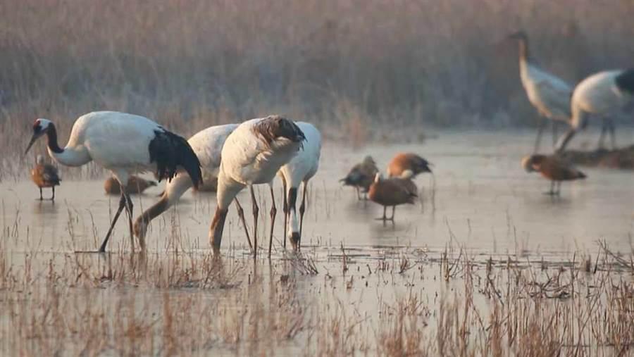 黃(渤)海候鳥棲息地(第一期)。(圖片來源:新華社)