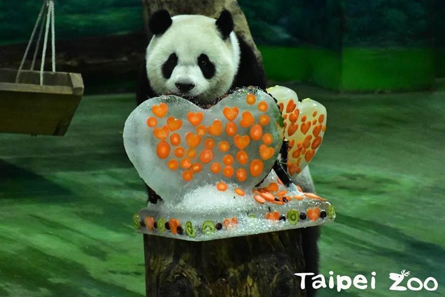 動物園特別為圓仔準備特製冰蛋糕。(翻攝臺北市立動物園臉書)