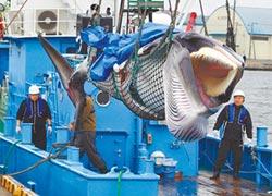 日重啟捕鯨 生態淪政治籌碼