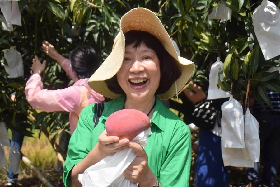 民眾参加「官芒南瀛、田蜜仲夏」芒果节採果活动,自己挑选要採的芒果。(刘秀芬翻摄)