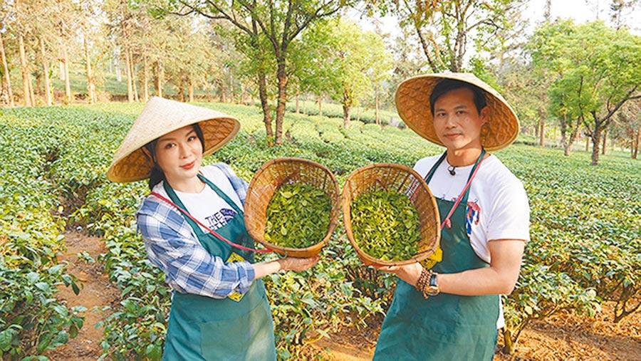 對老夫老妻來說,採茶或許是件無聊事,但對陳國華(右)與IVY來說,卻是有趣人生新體驗。圖片提供亞洲旅遊台