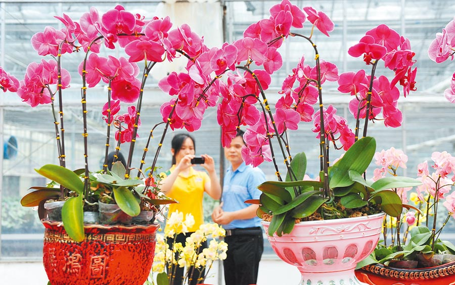 佛山展出海峽兩岸高新科技培植的花卉。(新華社資料照片)