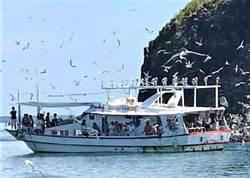 暑假玩澎湖 搭船賞鳥旅遊新祕境