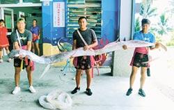 阿美族海祭 捕獲5米地震魚