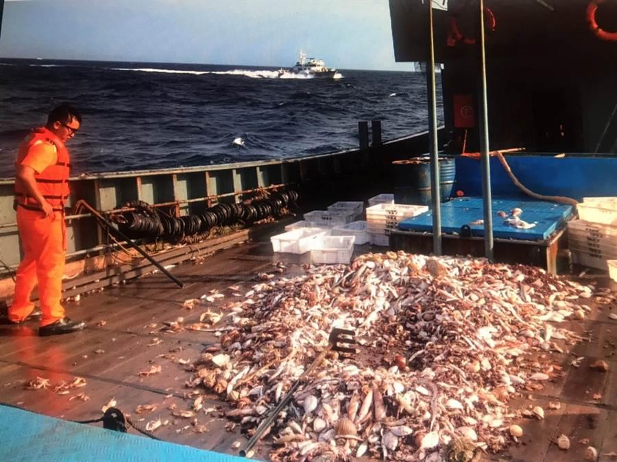 台中海巡隊查獲陸船越界捕魚,船艙內300公斤漁獲全部依法海拋。(陳淑娥翻攝)