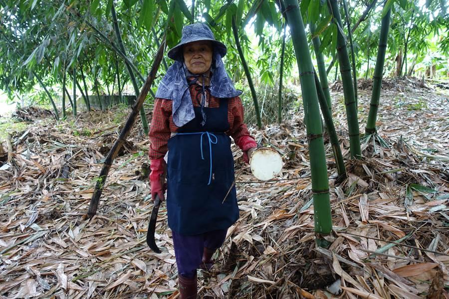 目前是竹筍盛產期,價格不振,筍農很無奈。(許素惠攝)