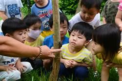 國衛院打造復育棲地  第二代獨角仙成蟲現蹤