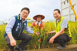 在來米收購價 農委會保證800元
