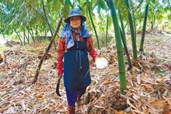 農民盼竹筍保價收購增量