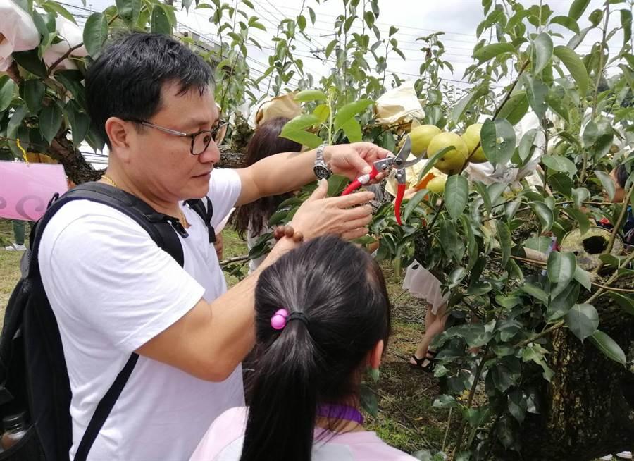 香港遊客連續兩天搭乘台中東勢梨果季採果巴士,體驗採果行程及系列活動,讓香港旅客認識台中農村與城市文化之美。(陳世宗翻攝)