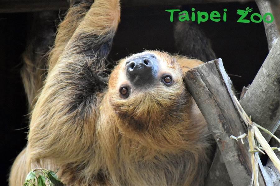 (圖/Taipei Zoo 臺北市立動物園提供)
