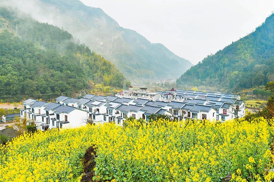 3月10日,浙江台州市仙居縣油菜花,隨著天氣轉暖綻放,一片生機盎然。 (新華社)