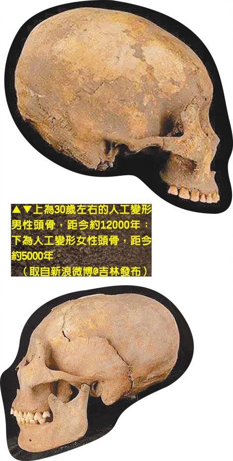 上為30歲左右的人工變形男性頭骨,距今約12000年;下為人工變形女性頭骨,距今約5000年。(取自新浪微博@吉林發布)
