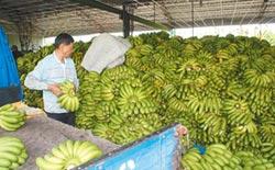 蕉價壟斷查無不法 黃國昌還在亂