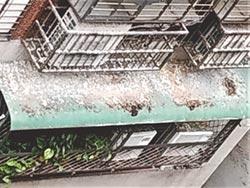 麥鴿來 信義區鴿糞惹民怨