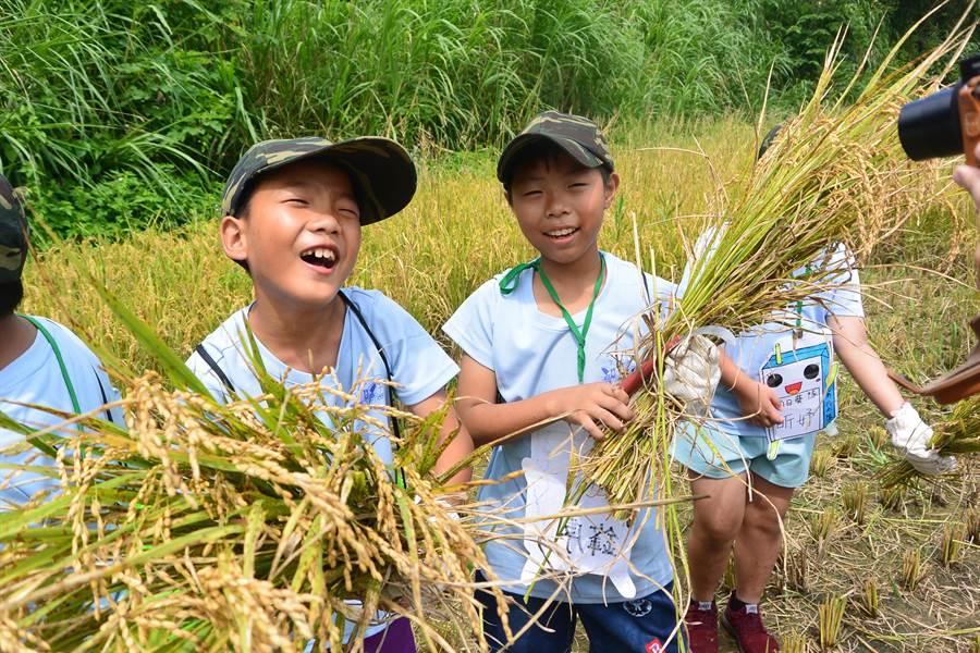 夏令營學員秀出剛收割完的稻穀,直說「好好玩!」。(巫靜婷攝)