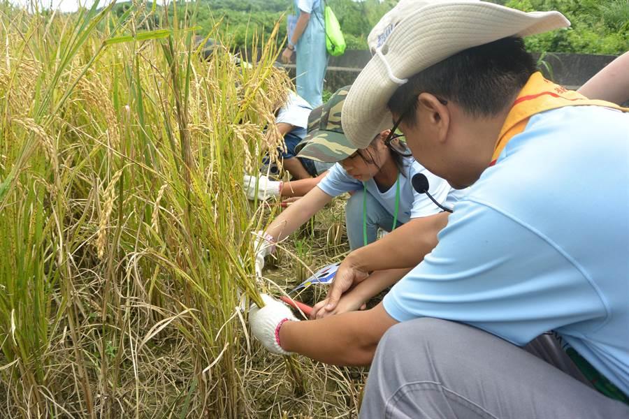 家扶夏令營帶領學員體驗石虎米田區農事,將生態保育觀念從小紮根。(巫靜婷攝)
