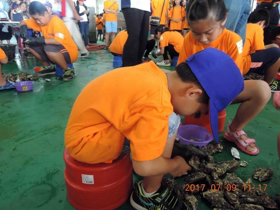 圖為2017年第7屆「剝蚵競賽」校園團體組,今年學生組最小8歲。(嘉義區漁會提供)