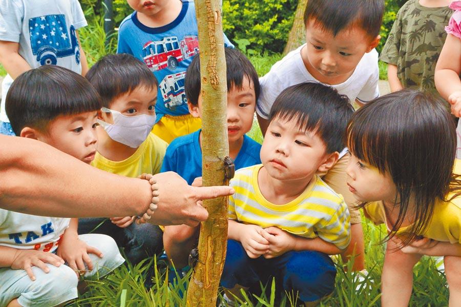 國家衛生研究院附設幼兒園孩童巧遇獨角仙,好奇地圍繞在光臘樹旁觀察。(巫靜婷攝)