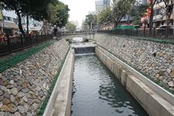 綠川魚群移往下游 中市水利局:護魚非滅魚