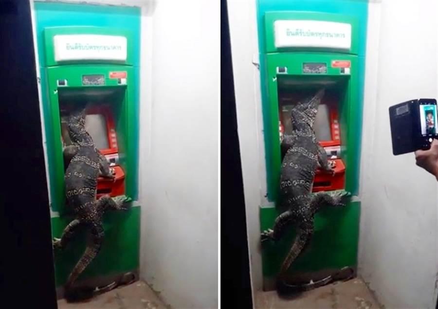水巨蜥趴在ATM上面,乍看級似人類在提款。(圖/翻攝自YouTube/iLifepost 愛生活)