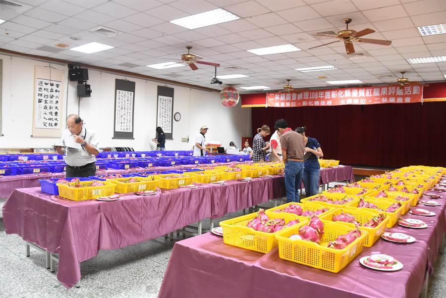 二林鎮農會今天舉辦優質紅龍果評鑑,參賽的100組紅龍果賣相、果體外觀和香氣甜度都令評審驚豔。(謝瓊雲攝)