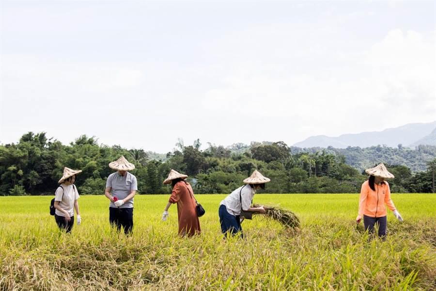 汗滴禾下土,粒粒皆辛苦,「大米缸計畫」凝聚眾人的善心。(圖/裏物文化提供)