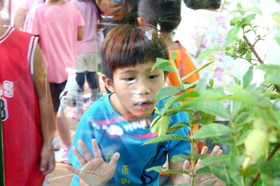 花蓮遠東百貨暑假期間打造「叢室生活」,以環保叢林及生態保育為主軸,將台灣原生竹節蟲直接搬入館內。(張祈翻攝)