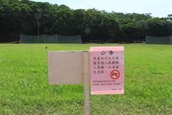 紅火蟻入侵清大田徑場 校方急拉封鎖線
