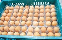 蛋價腰斬 每台斤20.5元