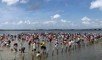 七股海鮮節開跑 上千民眾下水摸蛤兼洗褲