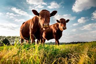 印男農場偷母牛!下秒死因超悽慘