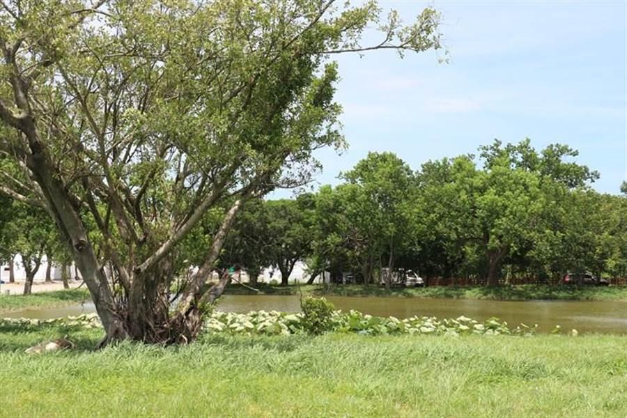 慈濟基金會苗栗日照中心占地寬廣,周圍擁有大片樹林綠地。(慈濟提供)