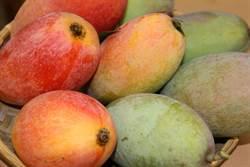 芒果有黑點能吃嗎?農委會這麼說