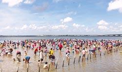 七股海鮮節 千人一起挖文蛤