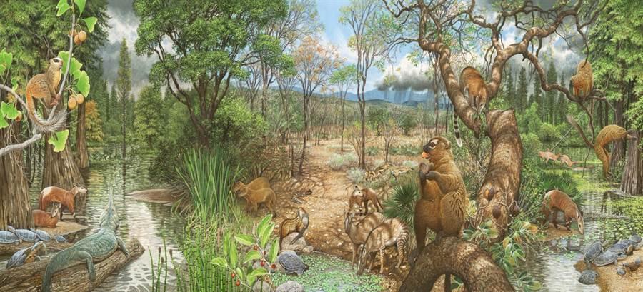 古新世,是恐龍滅絕之後的新時代,哺乳動物開始大發展,此時地球處於極熱時期。(圖/紐約自然史博館)