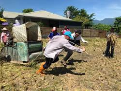 搶救阿美族原生稻 米棧推農村體驗活動