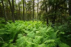 科学家研发高效捕捉碳的基改植物