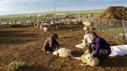 台灣人看大陸》在希拉穆仁草原初遇蒙古