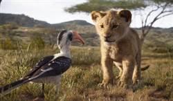 《獅子王》VR技術拍攝 獅子打鬥嬉戲太逼真