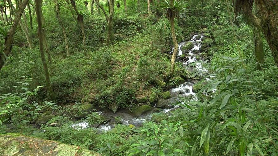 雪山坑山蘇林位於原始森林,伴隨潺潺水聲及蟲鳴鳥叫,少有人煙叨擾,被《賽德克巴萊》劇組相中,成為日軍森林游擊戰的取景地。(王文吉攝)