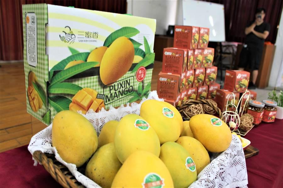 金蜜芒果是彰化縣埔心鄉特有的芒果品種,目前正值盛產,口感風味獨特,全鄉種植面積40多公頃。(謝瓊雲攝)