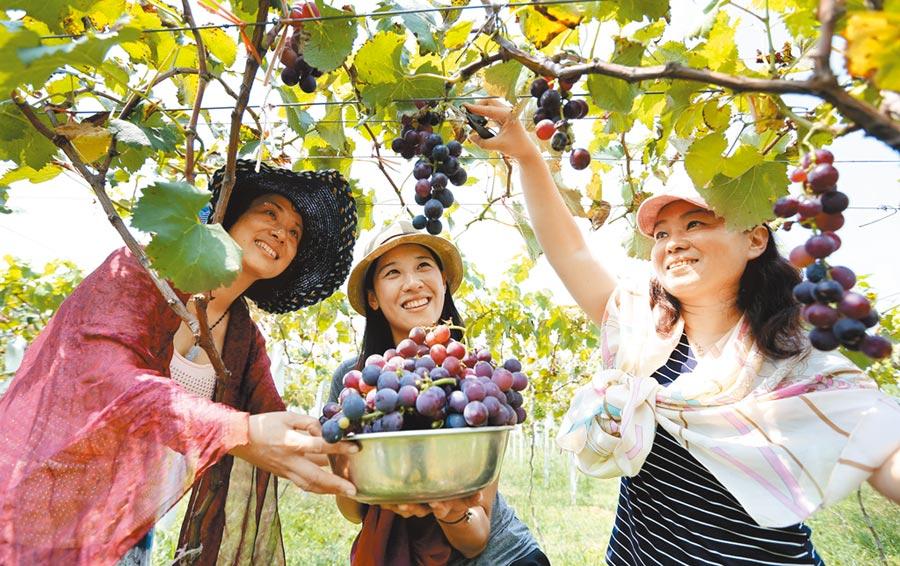 遊客在徐州一處農業觀光園採摘水果。(新華社資料照片)