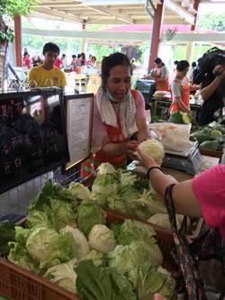 颱風未到 菜價先漲1至2成 農委會:預期心理