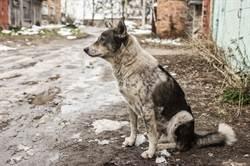 狗死守公路1年半拒收養 原因催淚