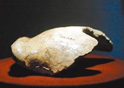 失蹤猿人化石 指向藏匿在日本