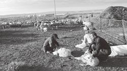 在希拉穆仁草原初遇蒙古