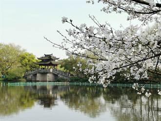 陸垃圾圍城全面上演!杭州4年垃圾可填滿西湖